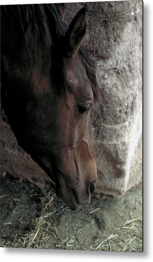 Horse Metal Print featuring the photograph Introspection by Lynard Stroud