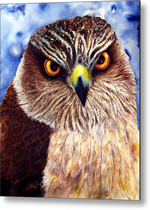 Wild Hawk Metal Print featuring the painting Hawkeyes by JoLyn Holladay