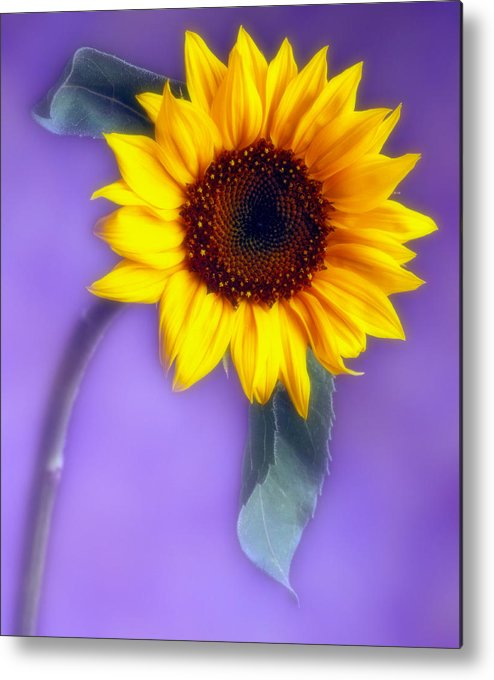 Flora Metal Print featuring the photograph Sunflower 1 by Joseph Gerges