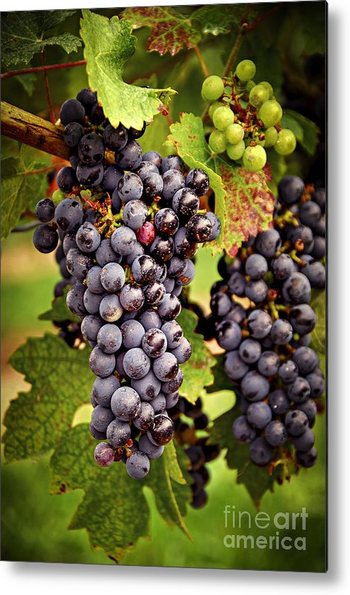 Grape Metal Print featuring the photograph Red Grapes by Elena Elisseeva