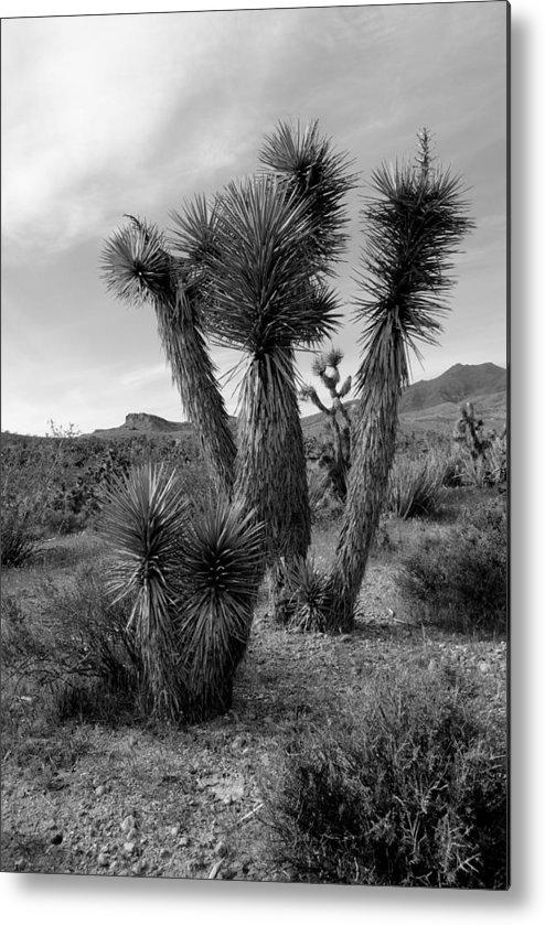 Joshua Tree Metal Print featuring the photograph Joshua Tree Utah by Nathan Abbott