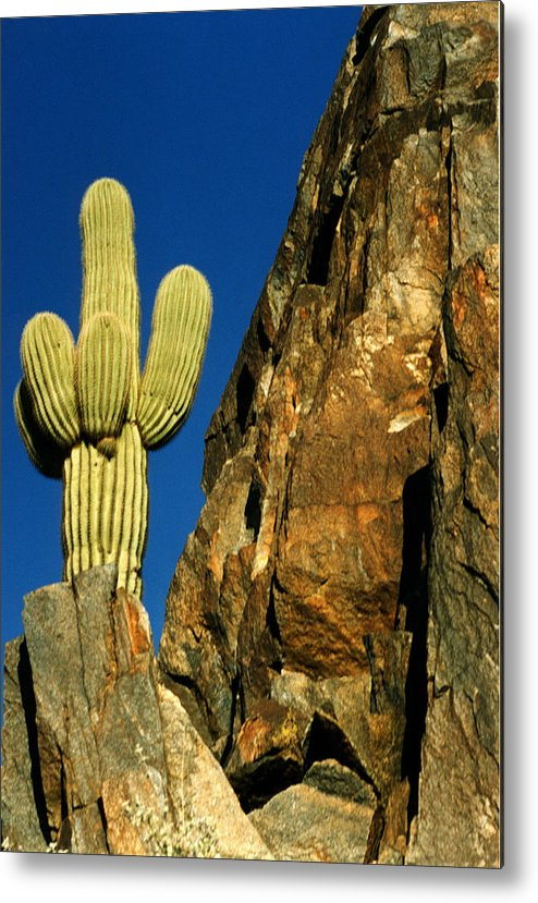 Landscape Metal Print featuring the photograph Arizona Sagauro Cactus by Robert Lozen