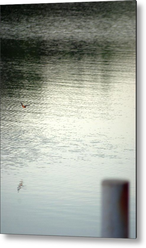 Bird Metal Print featuring the photograph Blue Bird Over The Water...  # by Rob Luzier