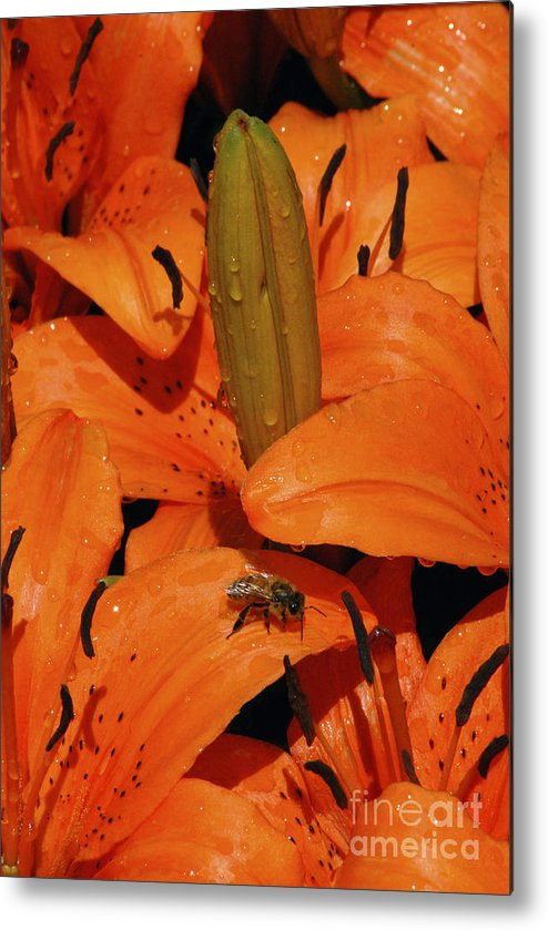Day Lily Metal Print featuring the photograph Busy Bee - 774 by Paul W Faust - Impressions of Light