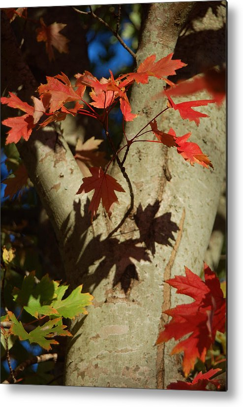 Autumn Metal Print featuring the photograph Carolina Autumn by Suzanne Gaff