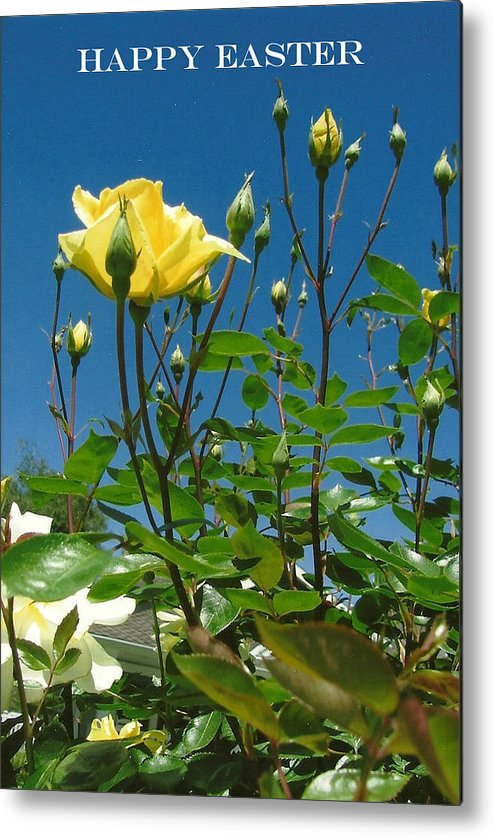 Yellow Rose Metal Print featuring the photograph Easter-rose by Dody Rogers