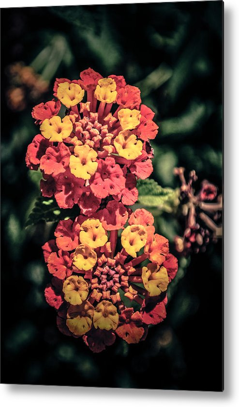 Flowers Metal Print featuring the photograph Flowers by AR Harrington Photography