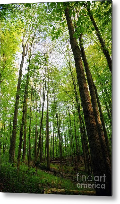 Landscape Metal Print featuring the photograph Into The Woods by Debra Fedchin