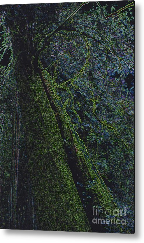 First Star Metal Print featuring the photograph Midnight Tree By Jrr by First Star Art