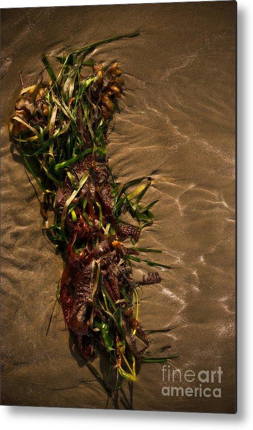 Algae Metal Print featuring the photograph Ocean Bouquet 4 by Venetta Archer
