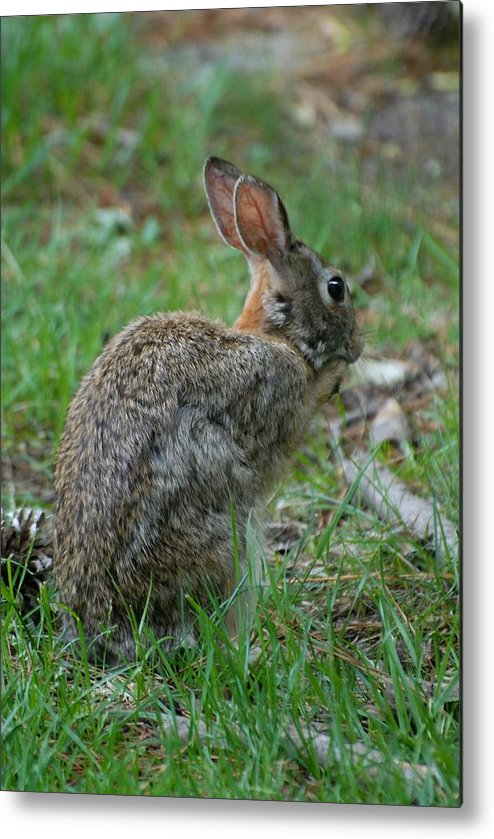 Rabbit Art Metal Print featuring the photograph Rabbit 287 by Joyce StJames