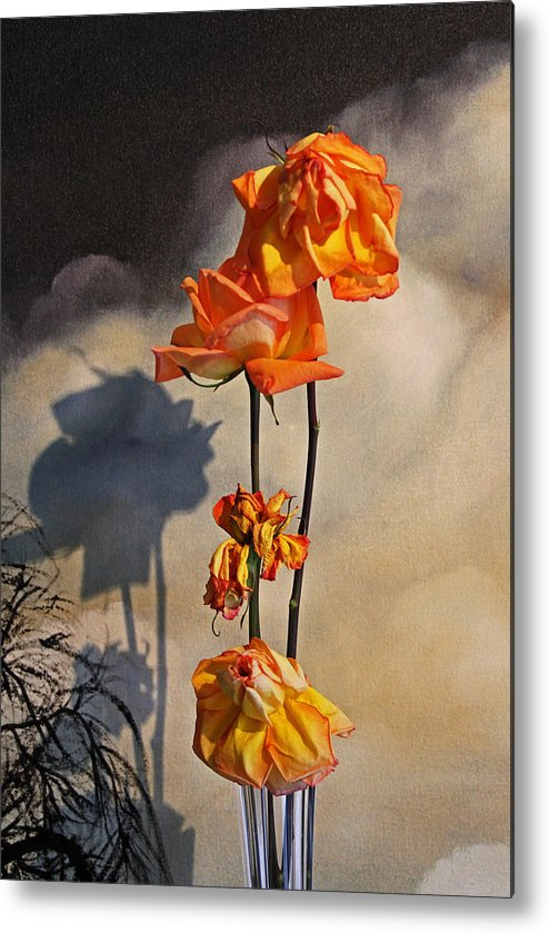 Roses Metal Print featuring the photograph Sad To See You Go by John Stuart Webbstock