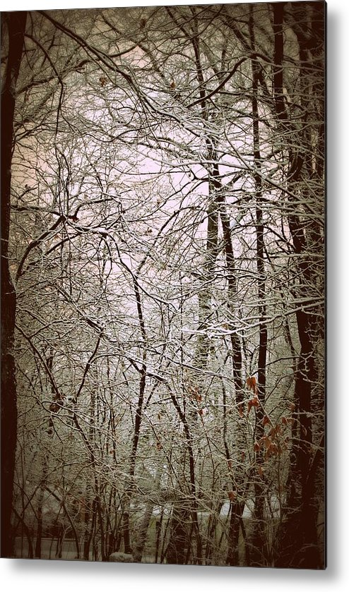 Snow Metal Print featuring the photograph Snow Cover Forest by Dawdy Imagery