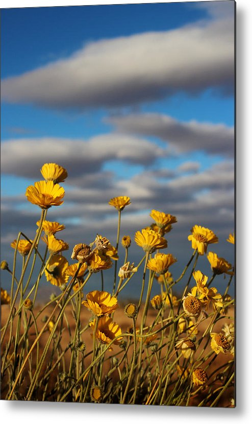 Sunlit Metal Print featuring the photograph Sunlit Yellow Wildflowers by Valerie Loop