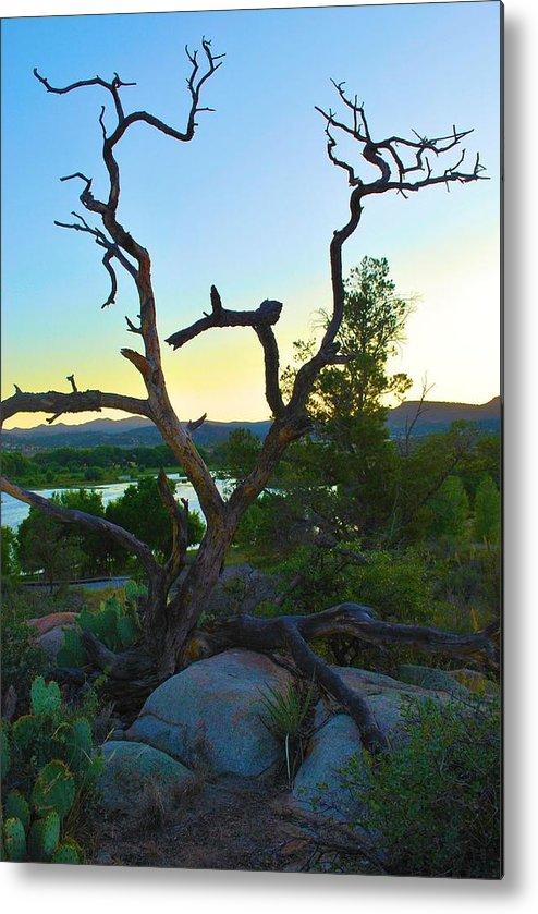 Tree Metal Print featuring the photograph Sunrise Prescott Arizona by Richard Jenkins