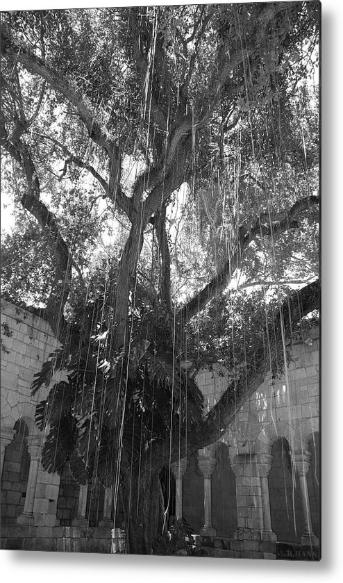 Black And White Metal Print featuring the photograph The Tree Vines by Rob Hans