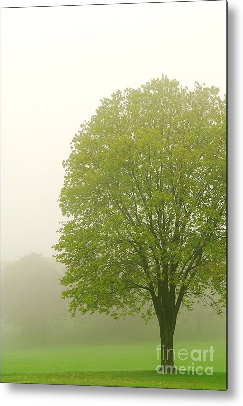 Fog Metal Print featuring the photograph Tree In Fog by Elena Elisseeva