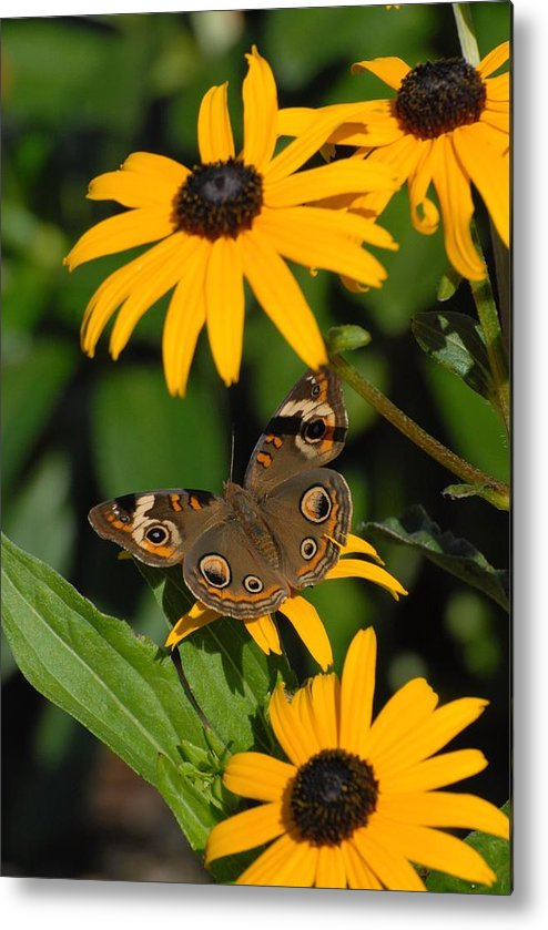 Butterfly Metal Print featuring the photograph Butterfly 94 by Joyce StJames