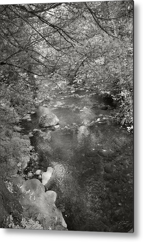 Creek Metal Print featuring the photograph Creekside by Kathleen Grace