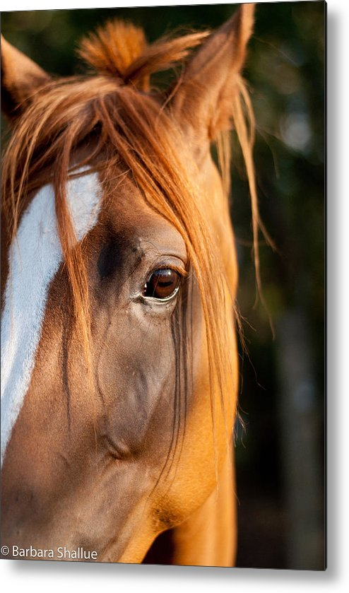 Horse Metal Print featuring the photograph I See You by Barbara Shallue