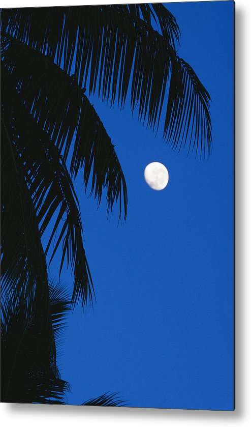 Pacific Islands Metal Print featuring the photograph Palm Tree Silhouetted Against The Sky by Mark Cosslett