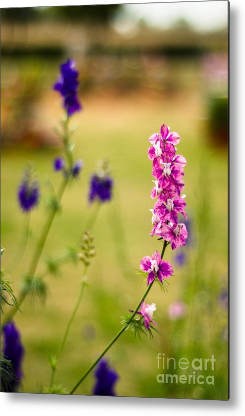 Flower Metal Print featuring the photograph Pretty Pink by Syed Aqueel