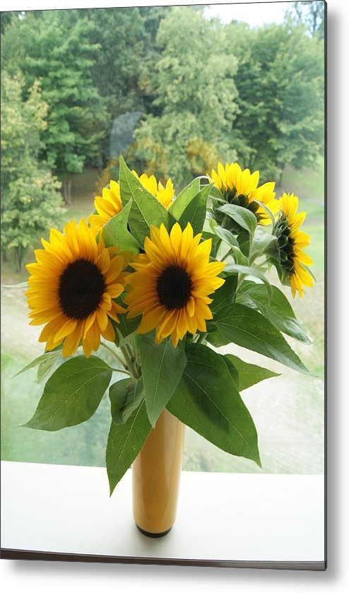 Metal Print featuring the photograph Sunflower On Window by Cristie Rieland