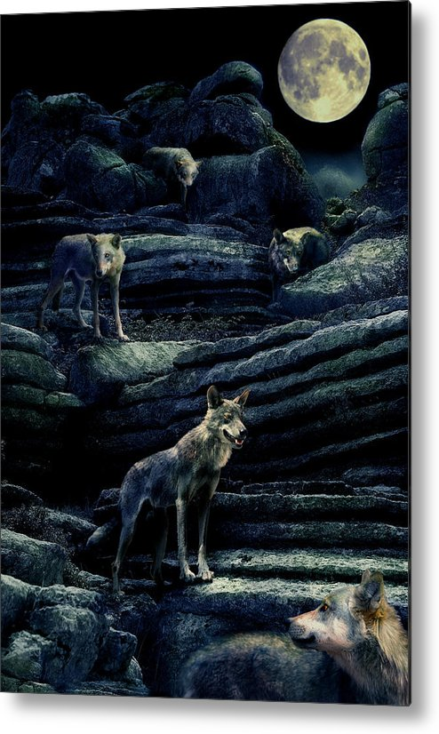Wolf Metal Print featuring the photograph Moonlit Wolf Pack by Mal Bray
