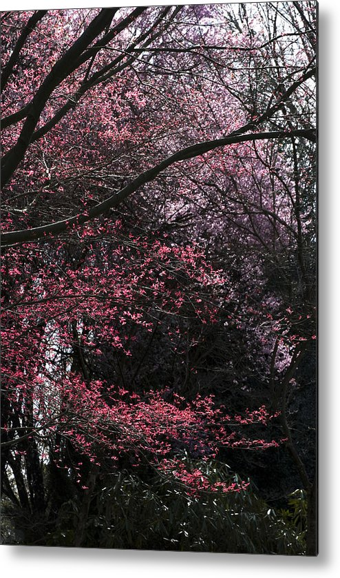 Portland Metal Print featuring the photograph Pink Trees by Craig Perry-Ollila