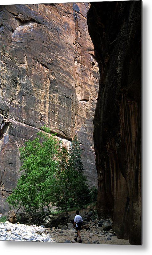 Zion National Park Metal Print featuring the photograph A Hiker Walks Among The Narrow by Stacy Gold