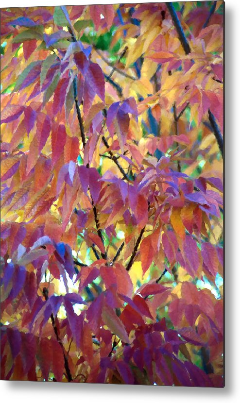 Ash Tree Metal Print featuring the photograph Autumn Ash Tree 1 by Steve Ohlsen