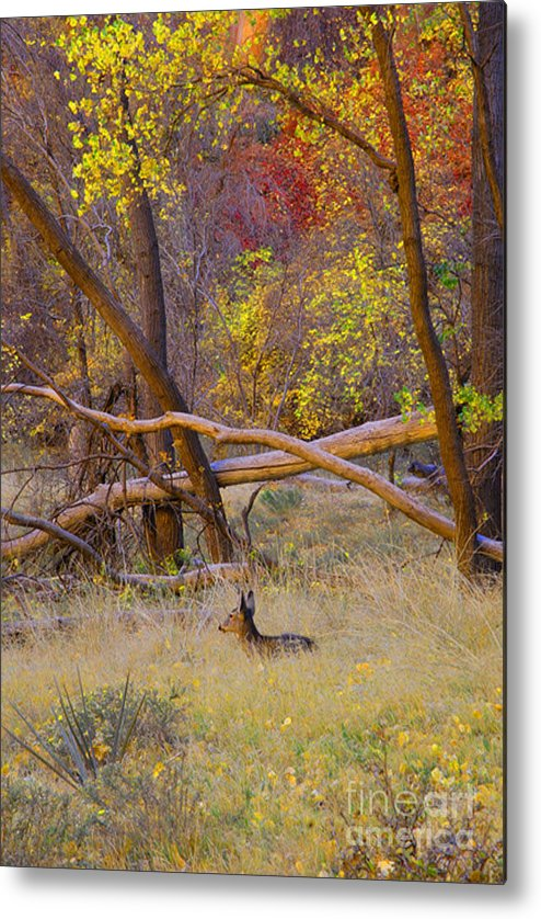 Deer Metal Print featuring the photograph Autumn Yearling by Dennis Hammer