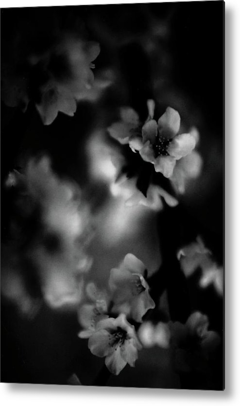 Metal Print featuring the photograph Black Flower by Brian Sereda