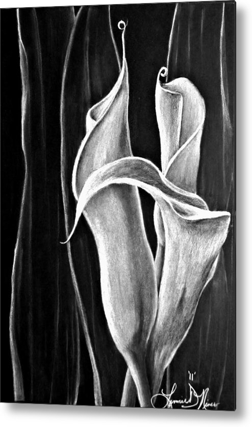 Callas Lily Metal Print featuring the drawing Callas Lilies Trio by Lonnie Niver