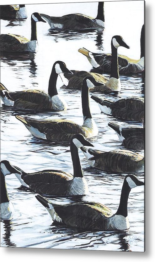 Wildllife Metal Print featuring the painting Canada Geese 1 by Steve Greco