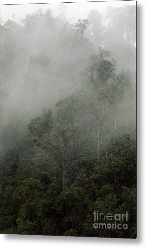 Rainforest Metal Print featuring the photograph Cloud Forest by Kathy McClure