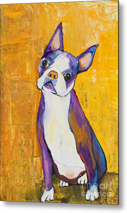 Boston Terrier Animals Acrylic Dog Portraits Pet Portraits Animal Portraits Pat Saunders-white Metal Print featuring the painting Cosmo by Pat Saunders-White