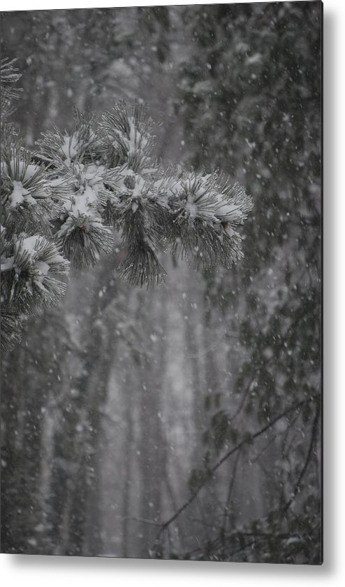 Nature Metal Print featuring the photograph Deep Woods Snow by Peter McIntosh