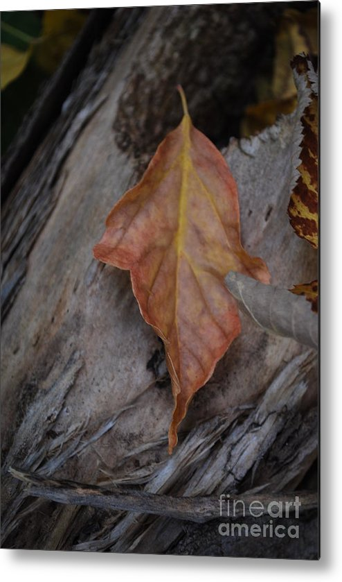Fall Metal Print featuring the photograph Dried Leaf On Log by Heather Kirk