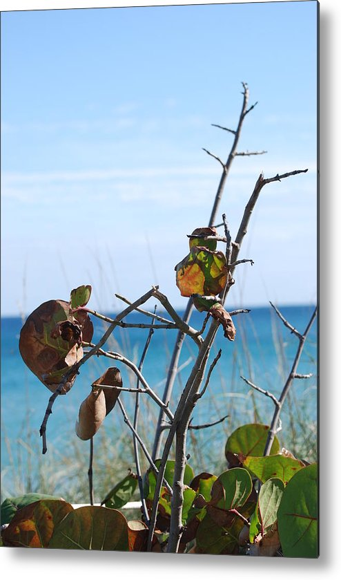 Ocean Metal Print featuring the photograph Dune Plants by Rob Hans