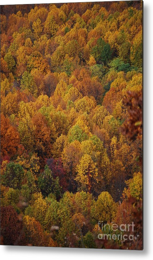 Fall Metal Print featuring the photograph Fall Cluster by Eric Liller