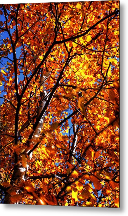 Ranch Golden Elevator Grain Bins Metal Print featuring the photograph Fall Colours by David Matthews