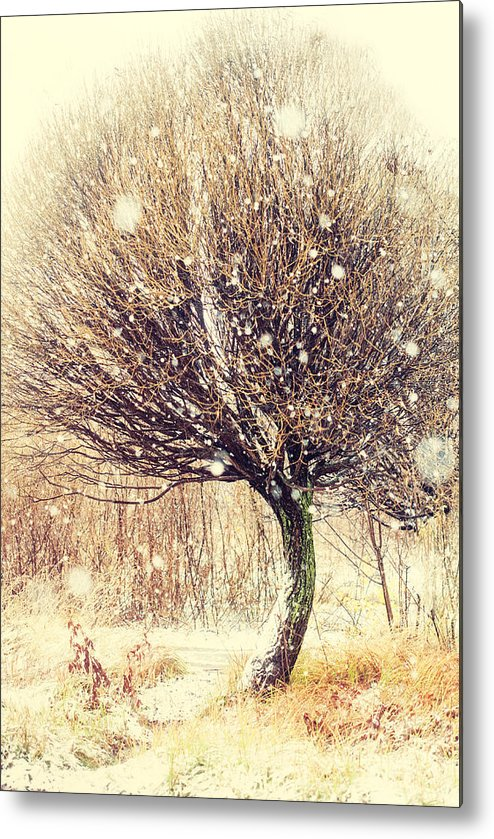 Snow Metal Print featuring the photograph First Snow. Snow Flakes by Jenny Rainbow