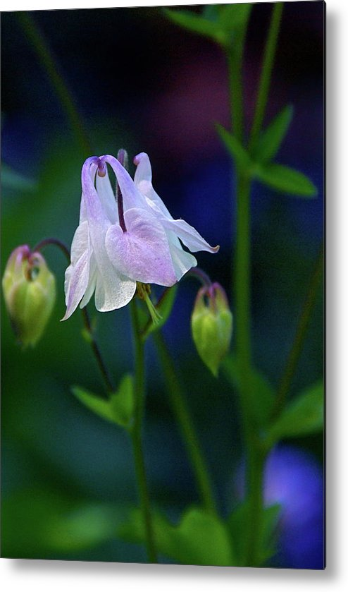 Columbine Metal Print featuring the photograph Floral Birds by Byron Varvarigos