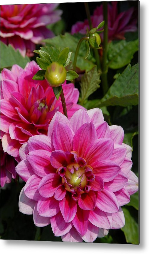 Flower Metal Print featuring the photograph Flowers 225 by Joyce StJames