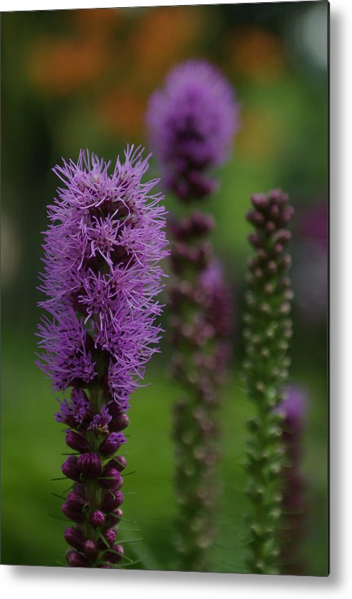 Nature Metal Print featuring the photograph Flowers 4 by Eric Workman