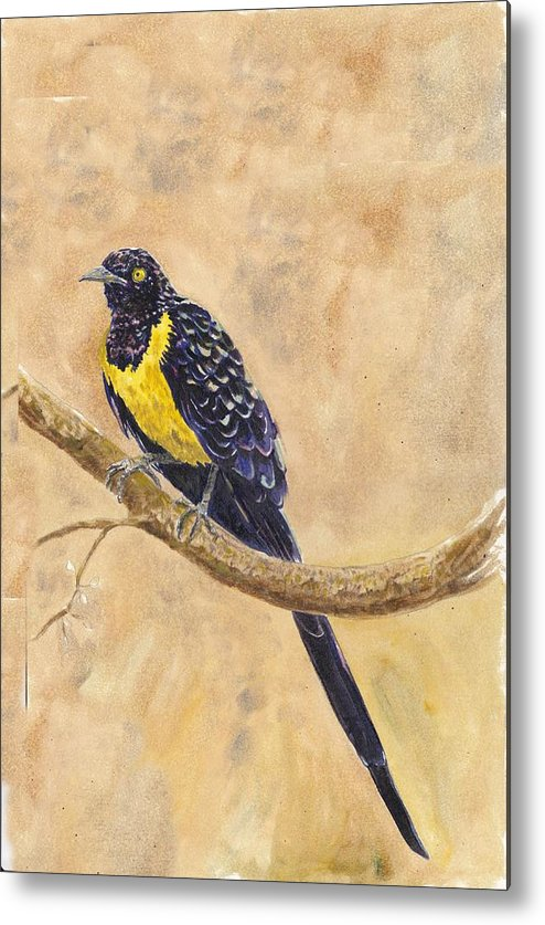 Wildlife Metal Print featuring the painting Golden Breasted Starling by Wayne Monninger