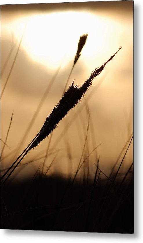 Metal Print featuring the photograph Grass by JK Photography