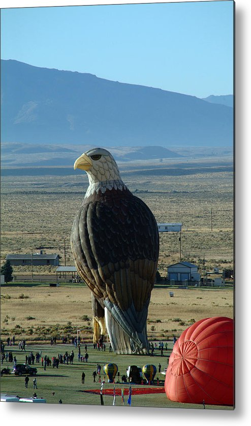 Bald Metal Print featuring the photograph Hot Air Eagle by Charles Ridgway