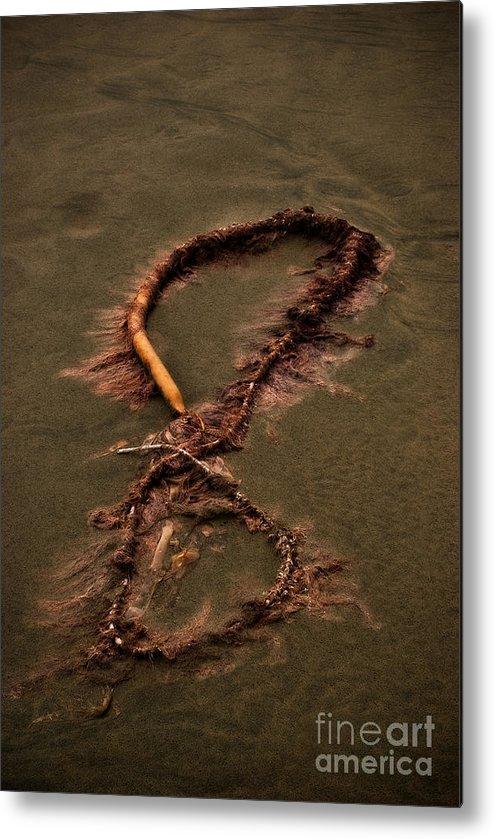 Algae Metal Print featuring the photograph Infinity by Venetta Archer
